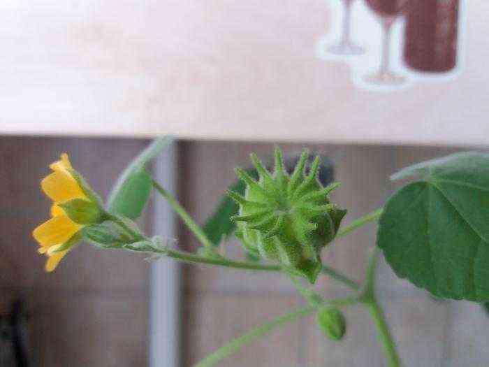 Как посадить мяту, а получить что-то другое Мята, Странное растение, Что это?, Оно живое, Гифка, Длиннопост