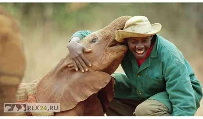 Приют для ОСИРОТЕВШИХ СЛОНЯТ Слоны, Кения, Доброта, Длиннопост