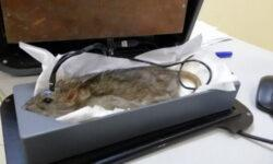 А вы хотите подышать на крысу?